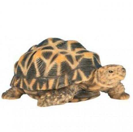 Bébé tortue étoilée en résine