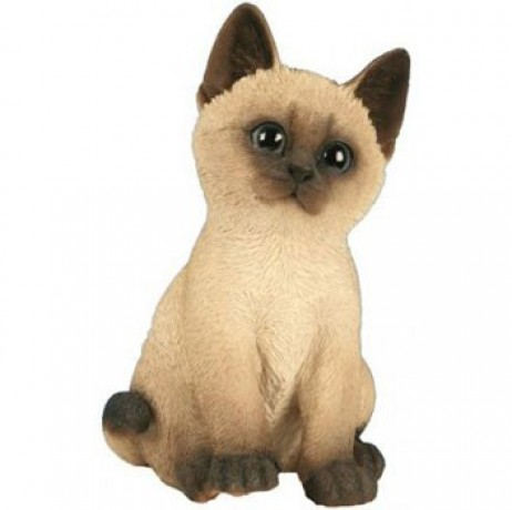 Chaton assis beige