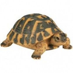 Tortue Hermann PM