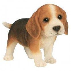 Beagle bébé