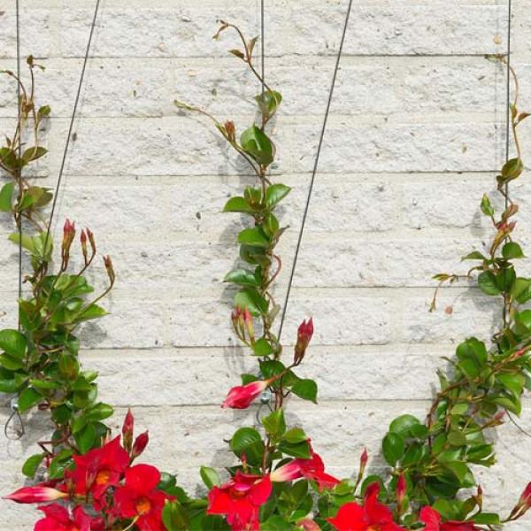 kit treillis m tallique pour plantes grimpantes. Black Bedroom Furniture Sets. Home Design Ideas