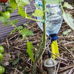 Le pied goutteur individuel est une véritable perfusion pour vos plantes, agrumes et potager. L'arrosage goutte à goutte Iriso s'adapte sur une bouteille en plastique, supprime la corvée d'arrosage et permet de partir en vacances sans tracas grâce à son autonomie allant de 10 à 30 jours (selon le réglage préalablement défini). Les pieds goutteurs individuels sont économiques et écologiques : ils vous permettront de réaliser 80% d'économie d'eau ! Chaque goutteur arrose sur 25 cm de diamètre. Si vous avez de gros pots, mettez plusieurs goutteurs pour une irrigation optimum. Finis les problèmes causés par le calcaire, chaque goutteur se démonte et se nettoie facilement.