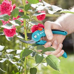 Large choix de sécateurs et coupe-tout pour tailler, ciseler et couper avec précision plantes, jeunes pousses, fil, mauvaises herbes, fleurs, branches, vignes... Ils possèdent une poignée ergonomique pour un confort de travail ainsi qu'un verrouillage sécurité intégré.
